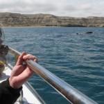 walvissen kijken vanaf de boot