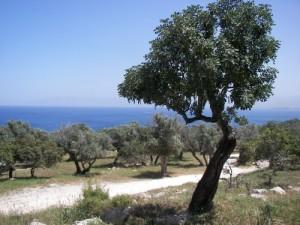 Landschap Akámas
