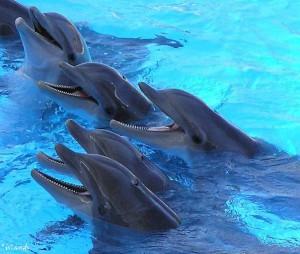 Dolfijnen in Loro Parque