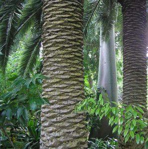 De botanische tuin van Tenerife
