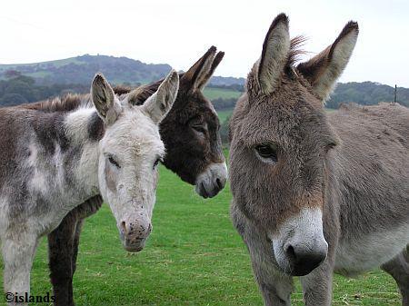 Bejaardentehuis voor ezels