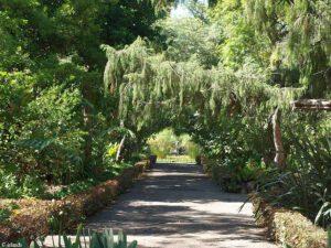 De Jardin Botanico in Puerto de la Cruz