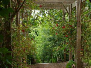 Ontelbare planten in de botanische tuin van Ventnor