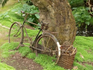 fiets/bicycle