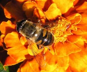 wesp/wasp