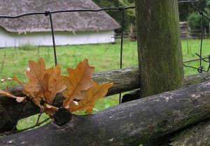 bladeren/leafs