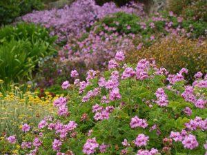 Botanische Tuin van Wight