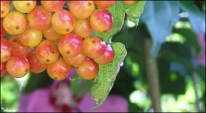 bessen/berries