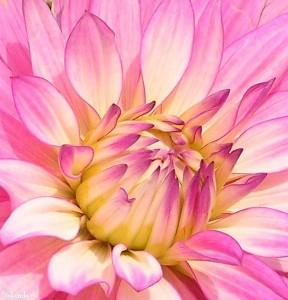bloem/flower