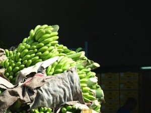 bananen/bananas