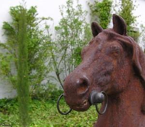 paard/horse