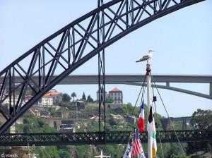 3 bruggen in Porto