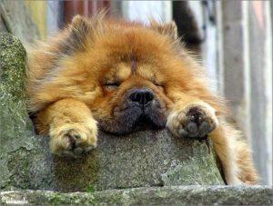 Hond in Porto