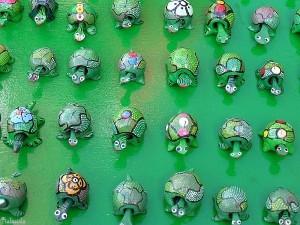 schildpadden/tortoises