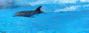 dolfijn/delphin