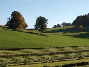 weiland/meadow