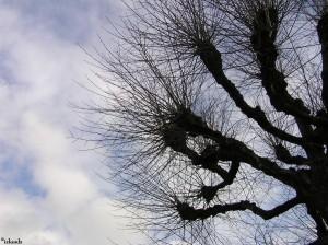 boom/tree