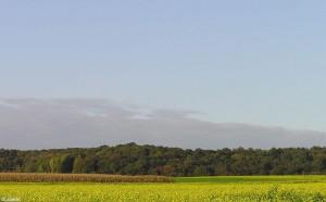 landschap/landscape