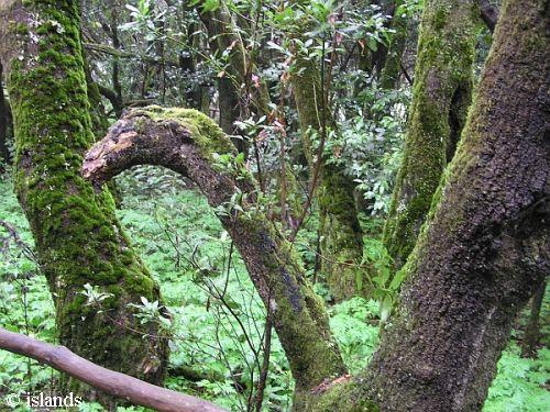 Urwald La Gomera