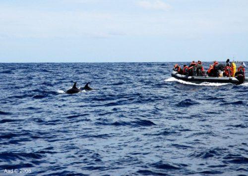 Walbeobachtung auf den Azoren