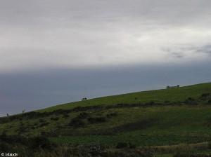 Die saftig grüne Wiesen der Insel Man