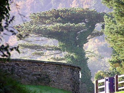 Das Arboretum der Insel Man