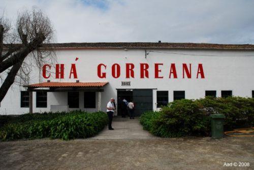 Tee von den Azoren